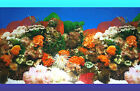 AQUARIUM Tank BACKGROUND POSTER - CORAL GARDEN - 60cm (h) - BUY by the METRE