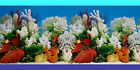 AQUARIUM Tank BACKGROUND POSTER - WHITE CORAL - 60cm(h) BUY by the LINEAL METRE