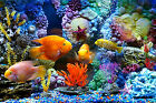 CHOIS Custom Films CF3049 Animal Golden Fishes Tank Corals Glass Window Frosted