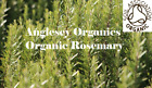 Soil Association Certified Organic Rosemary Essential Oil 10ml to 100ml