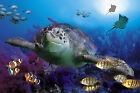 CHOIS Custom Films CF3053 Animal Fishes Seaturtle Glass Window Privacy Frosted
