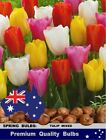 TULIPS  BULBS*  Most Popular TULIPS Mixture Colours: 10x or More BULBS