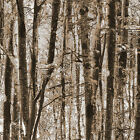 Forest Trees Fabric Available in 3 Colors Woods Nature Landsca 100% Ctn Benartex