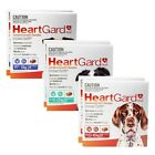 HEARTGARD PLUS Special Value Offer 12-Chews for Dogs-SYD Stock