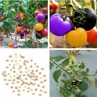 100pcs Rainbow Tomato Seeds Colorful Bonsai Organic Vegetables and Fruits Seeds