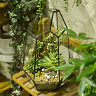 Irregular Glass Planter Geometric Terrarium Box Succulent Plant Planter