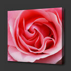 BEAUTIFUL PINK ROSE FLOWER PAINTING STYLE CANVAS PRINT WALL ART PICTURE PHOTO