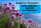 4 Thieves Essential Oil:  5 Different Blends Including Certified Organic