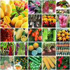 Mixed Tomato Seeds Home Garden Vegetable Fruit Seed Easy grow Plant Decor