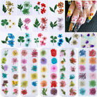 Nail Art 3D Decoration Mixed Real Preserved Dried Flowers Colorful Nails Tips