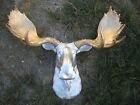 Black Gold Silver MOOSE HEAD LARGE WALL MOUNT LODGE CABIN LOG TAXIDERMY