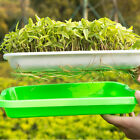 Hydroponics Seed Germination Tray Seedling Tray Sprout Plate Grow Nursery TrayLY