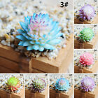 Simulated Artificial Succulent Plant Fake Flower Home Office Ornament Display