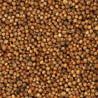 The Spice Lab No. 5033 - Whole Coriander Seeds All Natural Kosher Gluten Free