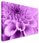 Purple Dahlia Floral Flower CANVAS Wall Art Picture ANY SIZE