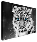 Snow Leopard Blue Eyes Waiting Canvas Prints Wall Art Picture Large Any Size
