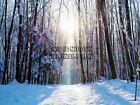 NATURE LANDSCAPE SNOW WINTER FOREST TREE SUN POSTER ART PRINT PICTURE