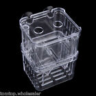 Fish Breeding Isolation Box Incubator Transparent Fish Tank Aquarium Accessory