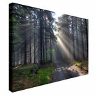 Rays through the woods Sun Beam Forest Canvas Art Cheap Wall Print Home Interior