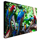 Colourful Parrots in Jungle Canvas wall Art prints high quality great value