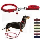 Didog Nylon Reflective Puppy Dog Collar&Leash Set with Bell for Small Dogs