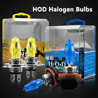 H11 H7 9005 9006 Xenon Gas Halogen Bulbs White/yellow Light Lamp100W 3000K/6000K