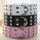 "Spiked Studded Leather Dog Collar for Large Dog Pitbull Bully Neck Size 17""-24"""