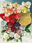 Flowering Sweet Peas Crazy Quilt Fabric Block Multi Szs FrEE ShiPPinG WoRld WiDE