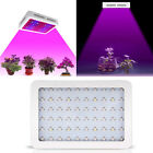 600W/1000W LED Grow Light Panel Lamp for Hydroponic Plant Full Spectrum Indoor