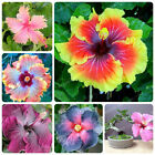 200pcs Exotic Hibiscus Seed Rosa-Sinensis Flower Tree Home Terrace Planting
