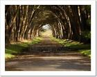 Cypress Tree Tunnel Art Print Home Decor Wall Art Poster - C