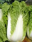Michihili Chinese Cabbage Pak Choi 200 -16,000 Seeds Bok Heirloom Greens Healthy