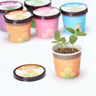 Micro Landscape Plant Planting Desktop Potted Mini Bonsai Home Plants Decor Beam