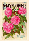 Pink Roses 1899 Mayflower Seed Packet Quilt Block Multi Szs FrEE ShiP WoRldWiDE