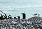 Seagulls Pebbles Photo Photograph Greeting Card Sea Beach Norfolk Birds
