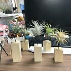 Wooden Base Air Plant Stand Holder Base Container Tabletop Planter Racks lin