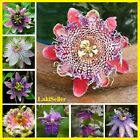 100Pcs Incarnata Passion Flower bonsai Seeds Home Garden Plants Multi Color Mix