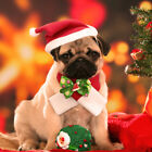 Holiday Dog Hat and Neck Scarf Christmas Pet Puppy Cat Santa Costume Accessory