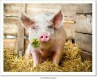 Lucky Pig Art/Canvas Print. Poster, Wall Art, Home Decor - C