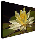 Water Flower Yellow - Canvas Wall Art Pictures For Home Interiors