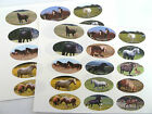 Horse & Pony Breeds Oval Seal Labels,  Stickers Gift Wrap,  Envelopes,  Bags,  Cards
