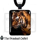 Tiger Animal Africa Cat Wildlife Zoo Safari Asia Photo Charm Pendant Necklace