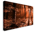 Red Sun Ray In The Woods 40x20inches Wall Picture Canvas Art Cheap Print