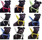 Strong As Leather Staffy Staff Staffie Dogs Harness /Lead/Leash/Collar Or Sets