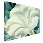 White Floral Flower Canvas Wall Art Print Large + Any Size