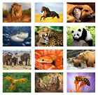 Animal Poster, Wildlife,Pets,Nature, Various species A3 or A4 PRINT POSTER