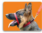 CANNY COLLAR BEST TRAINING COLLAR ON THE MARKET (RED)  AUTHORISED SELLER