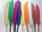 20  Small  Goose Feathers - Approx 3.5- 5 inches