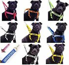 Strong As Leather Staffy Staff Staffie Bull Terrier Dogs Harness Or Lead Set