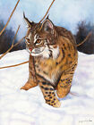 Bobcat In The Snow by Jackie Vaux Art Paper or Canvas Print